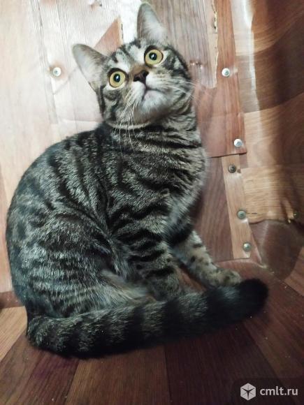 Кошка с бенгальским окрасом. Фото 1.