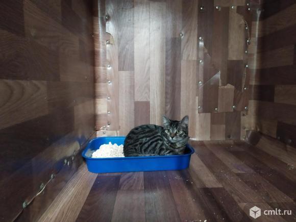 Кошка с бенгальским окрасом. Фото 3.