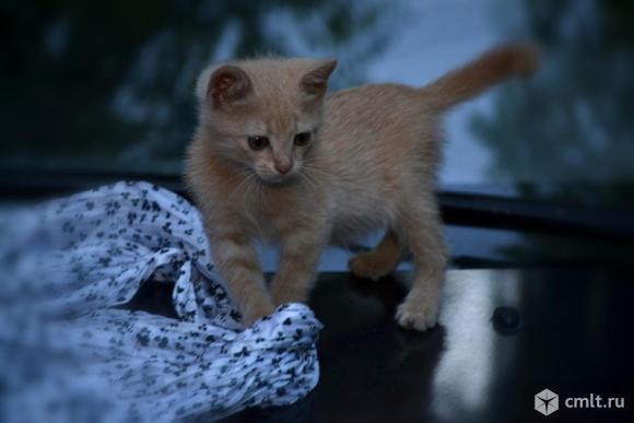 Котенок Рыжий - в хорошие руки. Фото 1.