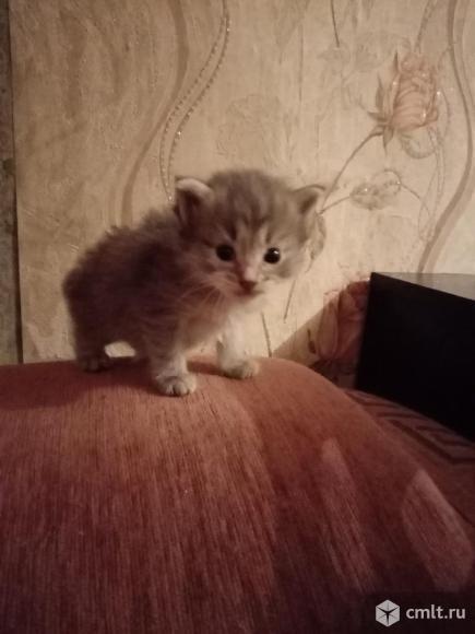 Малыши котята. Фото 1.