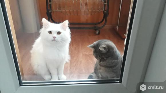 Отдам в хорошие руки котят. Фото 10.