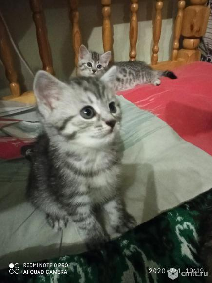 Отдам в хорошие руки котят. Фото 3.