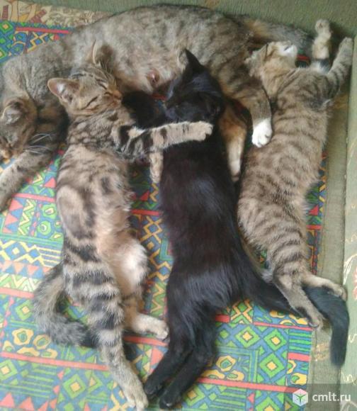 Котят в добрые руки.. Фото 17.