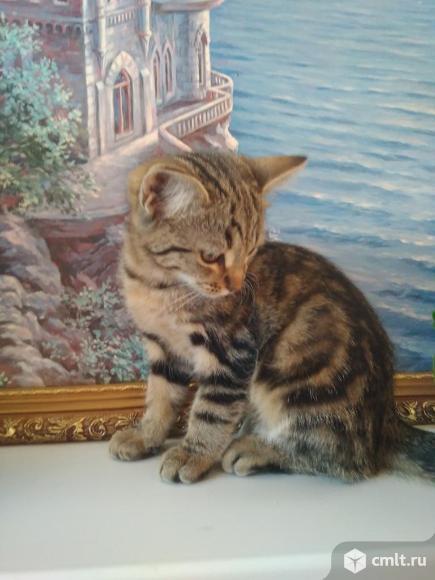 Котят в добрые руки.. Фото 1.