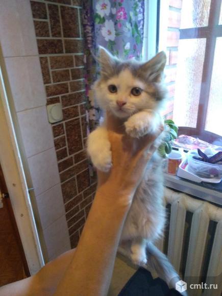 Котята в добрые руки.. Фото 15.