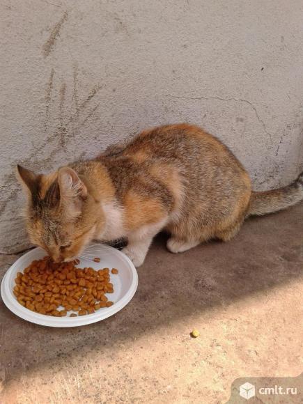 Трехцветная кошка в добрые руки. Фото 1.