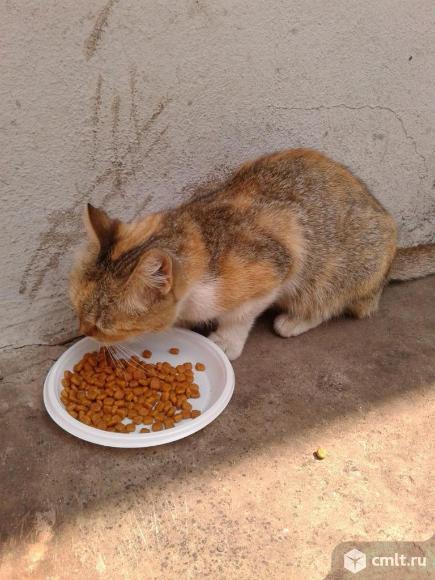 Трехцветная кошка в добрые руки. Фото 5.