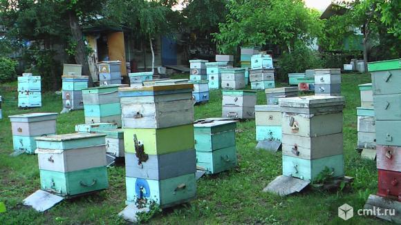 Продается пасека на рутовских рамках вместе с ульями и медом. Фото 3.