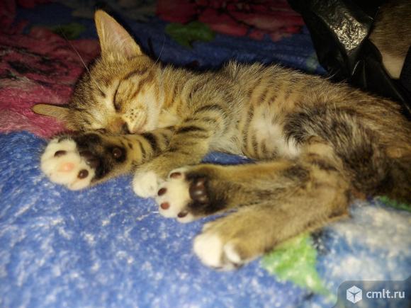 Котята в хорошие руки. Фото 11.