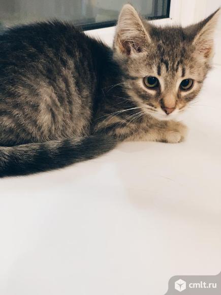 Светло серый котенок (девочка). Фото 7.