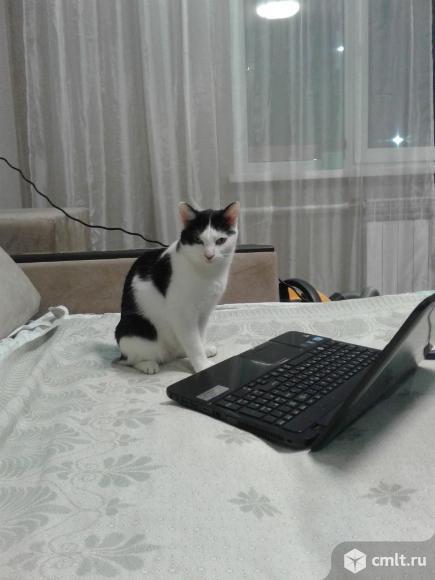 Кошка - гений в добрые руки. Фото 1.