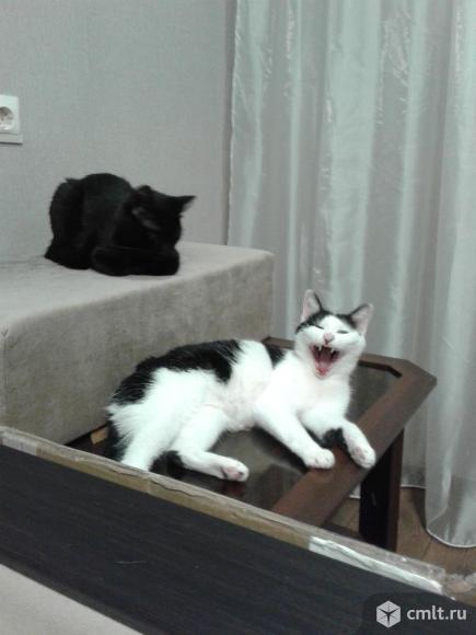 Кошка - гений в добрые руки. Фото 5.