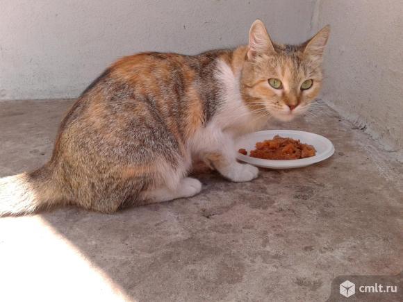 Красивая кошка смешанного окраса. Фото 1.