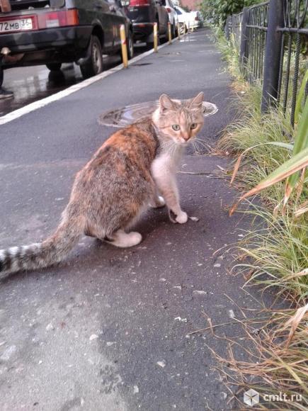 Красивая кошка смешанного окраса. Фото 6.