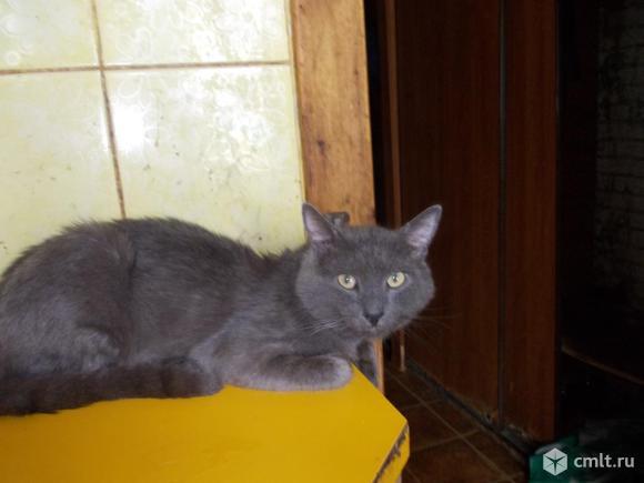 Кот в добрые руки. Фото 1.
