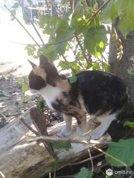 Котята -богатки ищут дом. Фото 3.