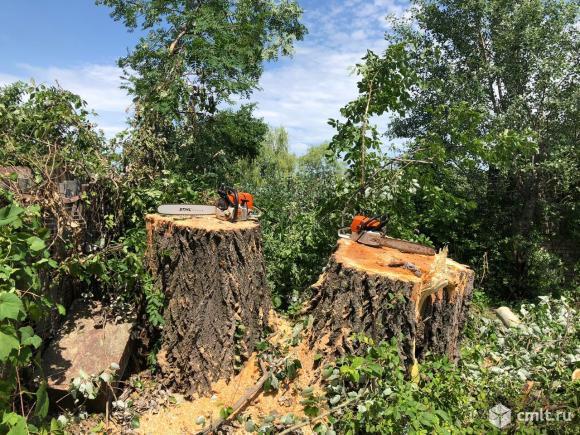 Опиловка и спиливание деревьев, расчистка территорий. Автовышки услуги.. Фото 1.