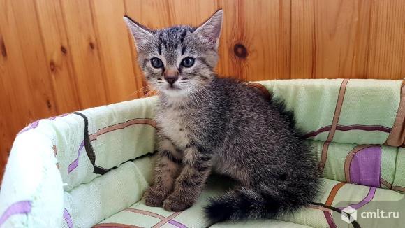 Отдам в хорошие руки котят. Фото 1.