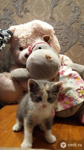 Отдам симпотичных и игривых котят в добрые и надежные руки. Фото 1.