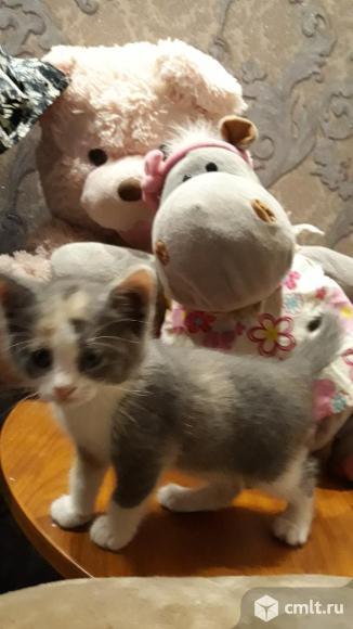 Отдам симпотичных и игривых котят в добрые и надежные руки. Фото 5.