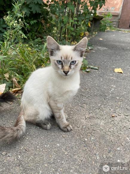 Котята!. Фото 1.