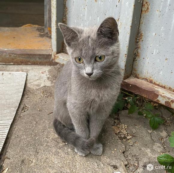 Котята!. Фото 4.