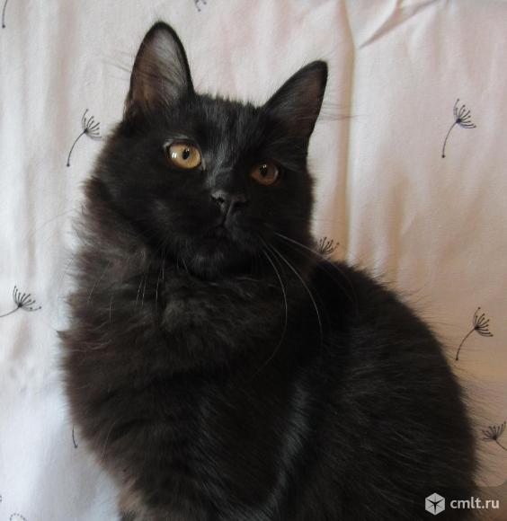 Котята подростки. Фото 1.
