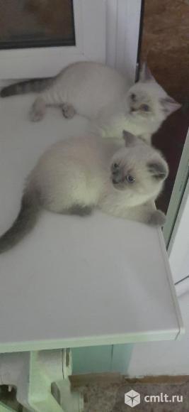 Продам котят. Фото 2.