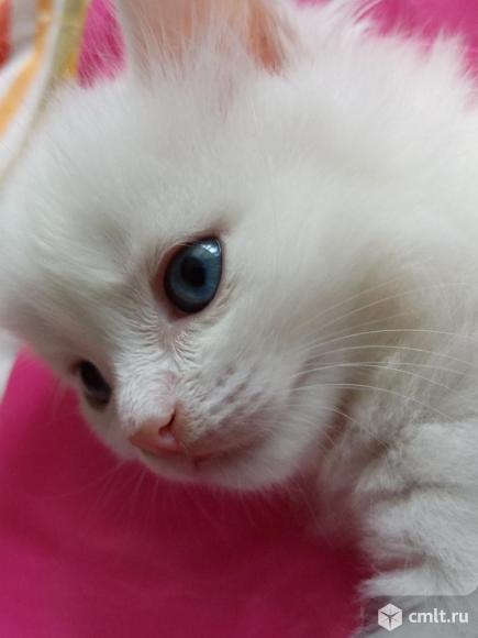 Котята бесплатно. Фото 1.