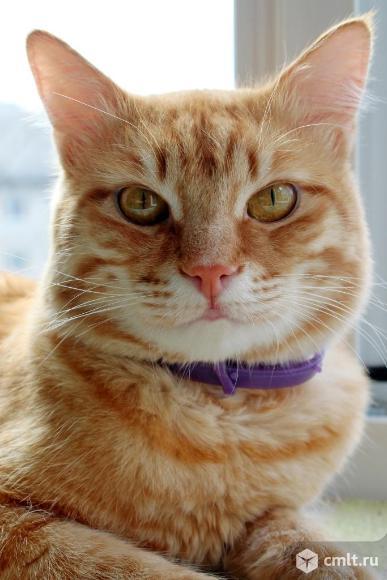 Котик Рыжик ищет дом. Фото 5.