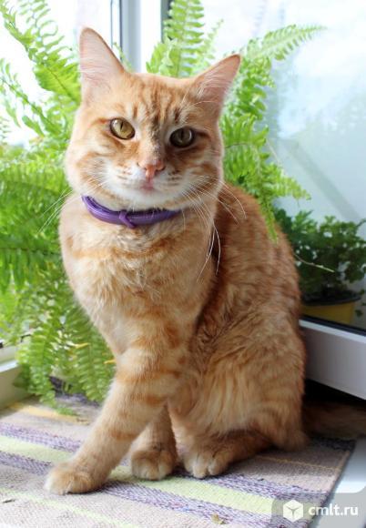 Котик Рыжик ищет дом. Фото 1.