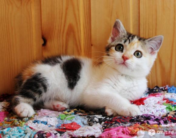 Котенок девочка Искорка ищет дом. Фото 5.