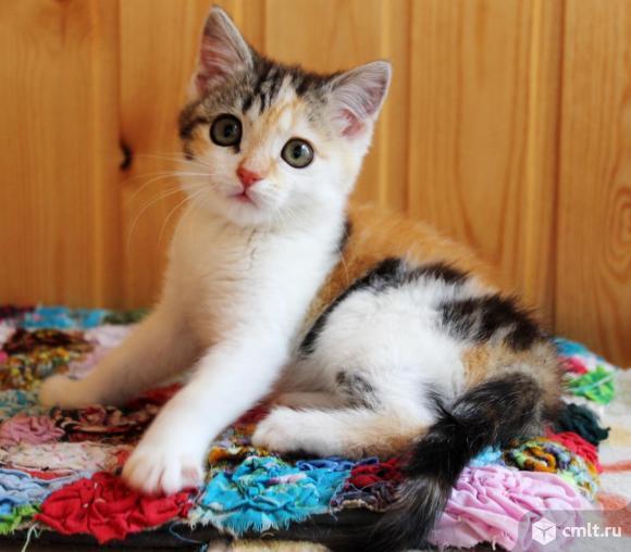 Котенок девочка Искорка ищет дом. Фото 1.