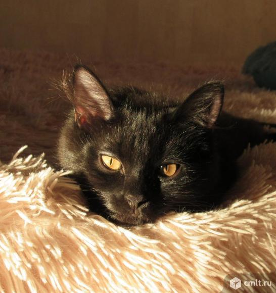 Котята подростки. Фото 8.