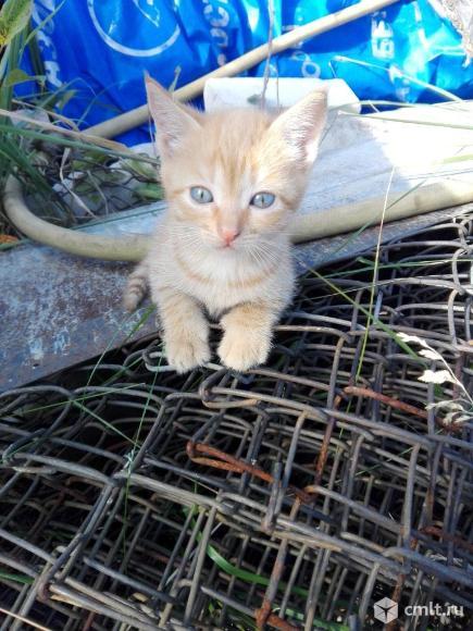 Котята в добрые руки). Фото 1.