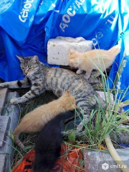Котята в добрые руки). Фото 6.