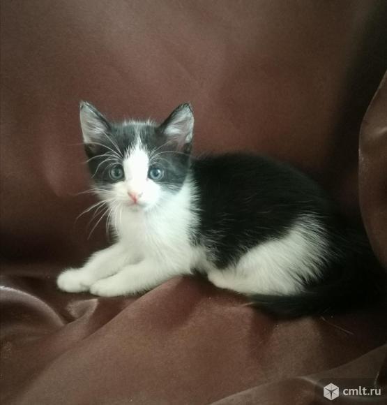Котята. Фото 6.
