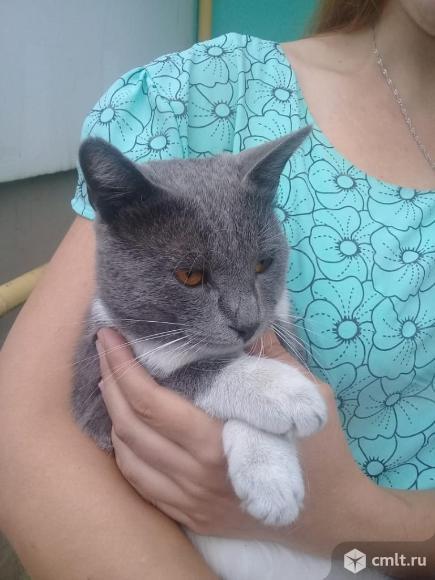 Кот по имени Галкин ищет дом. Фото 2.