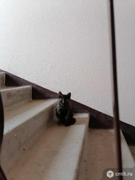Муське нужен дом. Фото 2.