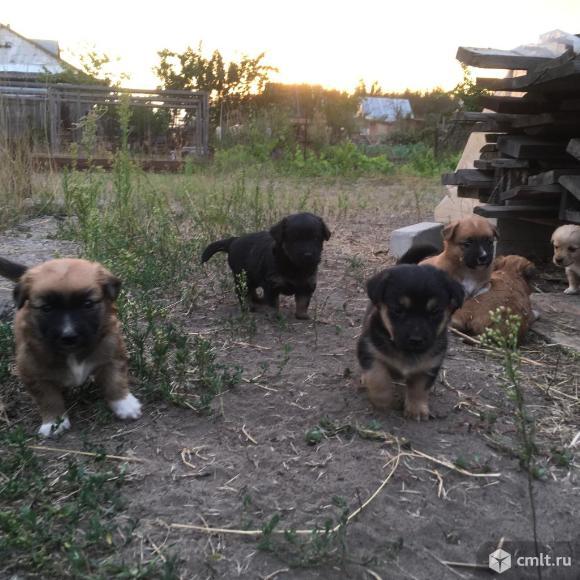 Отдам симпатичных щенят в хорошие руки. Фото 5.