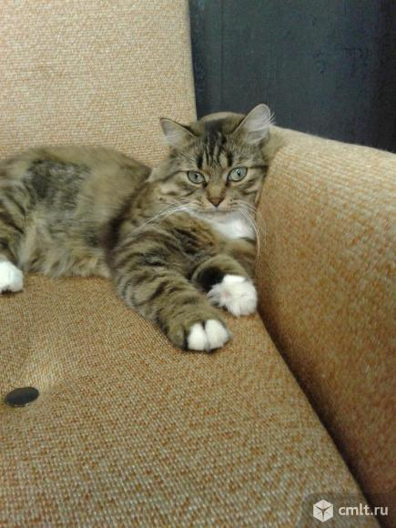 Кошка Пуша в добрые руки. Фото 7.