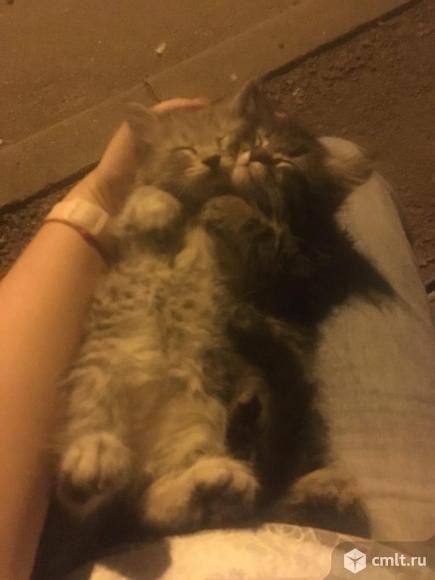 Котята. Фото 3.