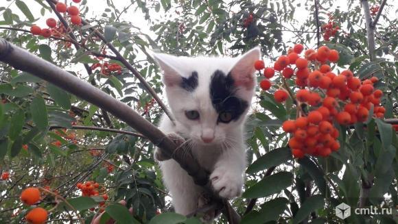 Отдам в хорошие руки котенка. Фото 1.