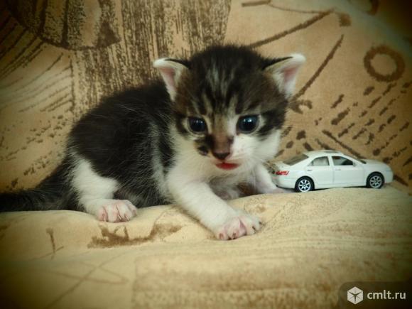 Котята красивые. Фото 1.