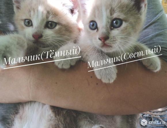 3 котенка , котята. Фото 7.
