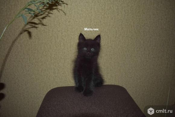 Котят в заботливые руки. Фото 1.