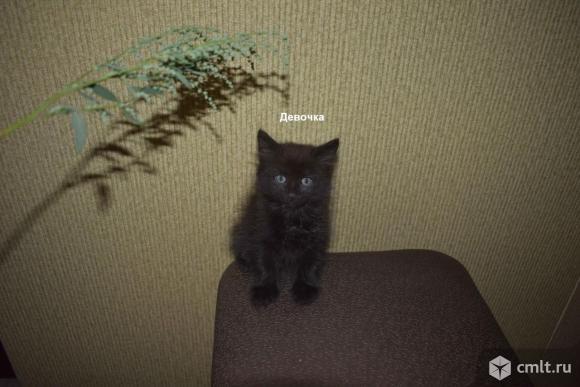 Котят в заботливые руки. Фото 2.