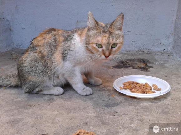 Бездомная кошка ждет своего хозяина. Фото 1.