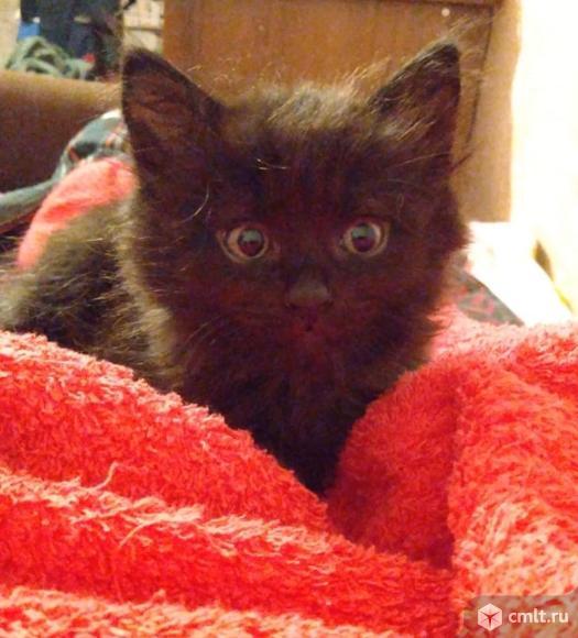 Котёнок мальчик. Фото 1.