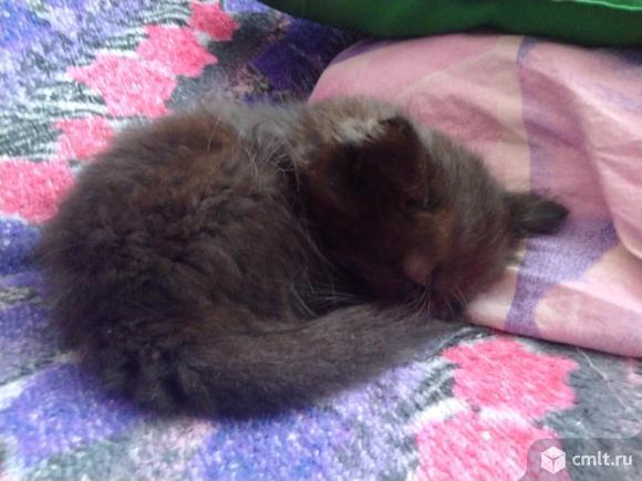 Котёнок мальчик. Фото 2.